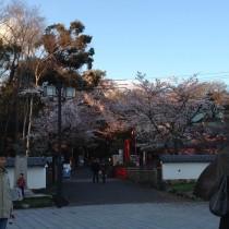 犬山祭り29