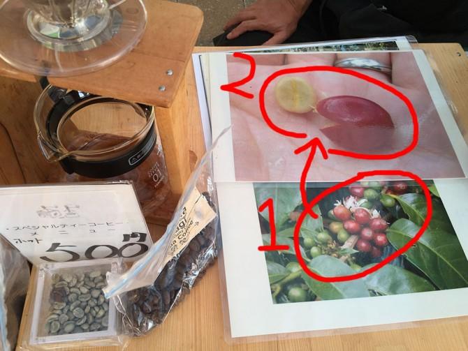 生豆:焙煎前の珈琲豆