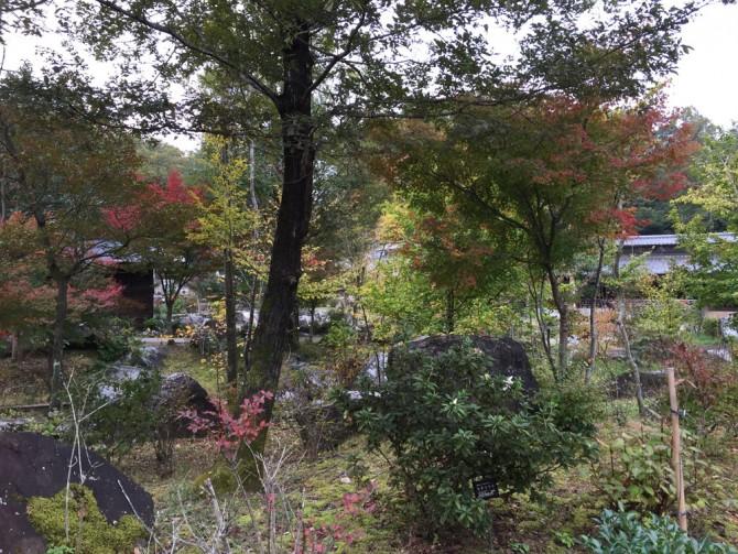 昭和村の散策コースに広がる木々や緑