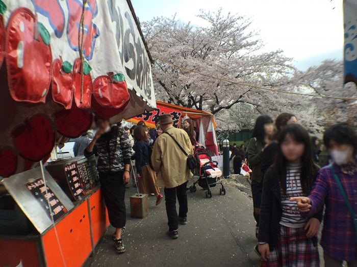 新境川の桜並木/花見客