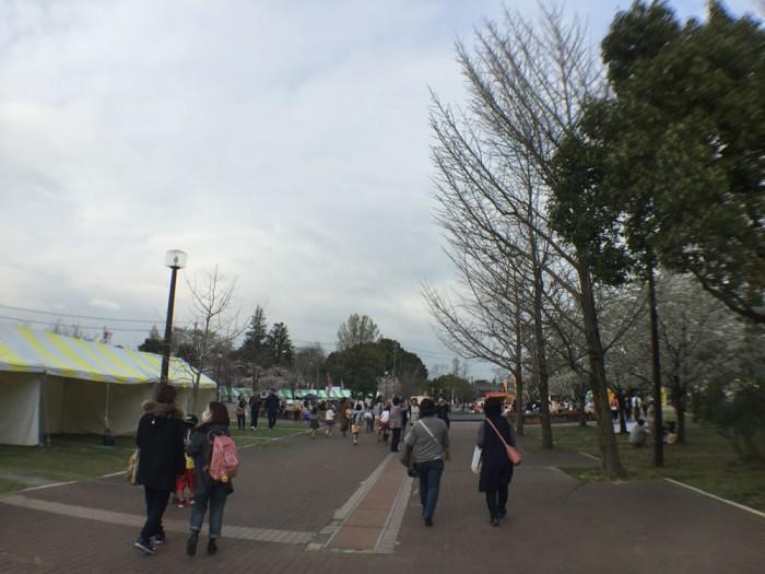 各務原市桜まつり in 各務原市民公園