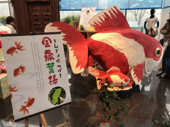 金魚葉椿(きんぎょはつばき)