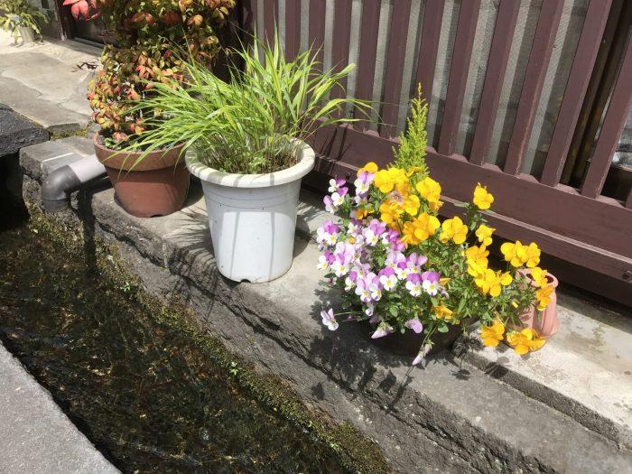 郡上八幡:軒先の水路と花